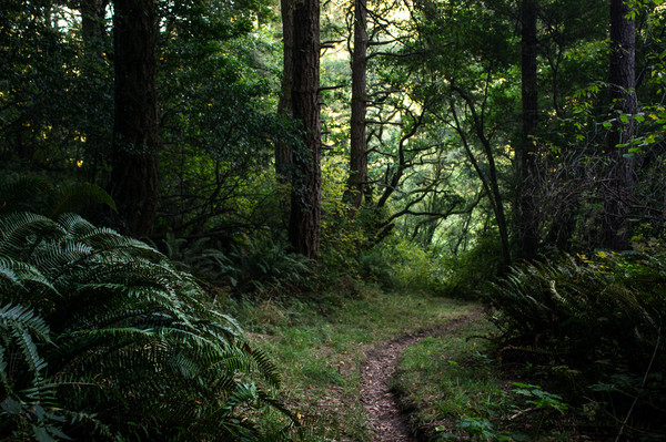 Heavily Forested Trails of Point Reyes